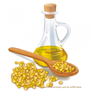 Vector illustrations of natural products: soybeans